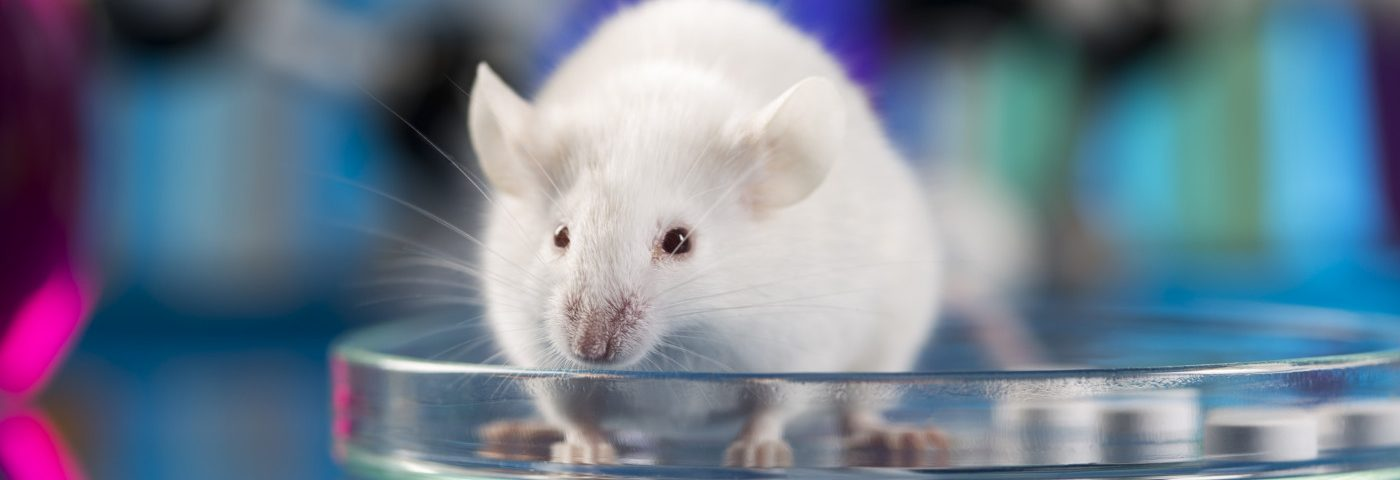 ST-920 Gene Therapy Found Safe, Effective in Mouse Model; Supports First-In-Human Trial