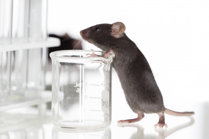 Fabry mouse model, genome-editing therapy